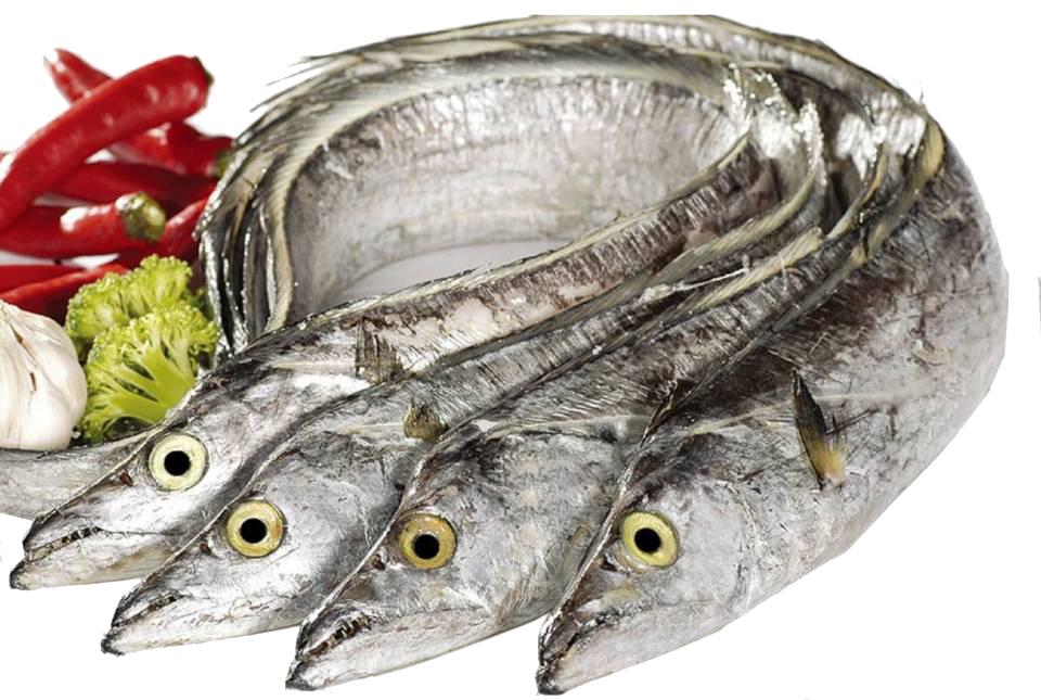 海上通带鱼.jpg