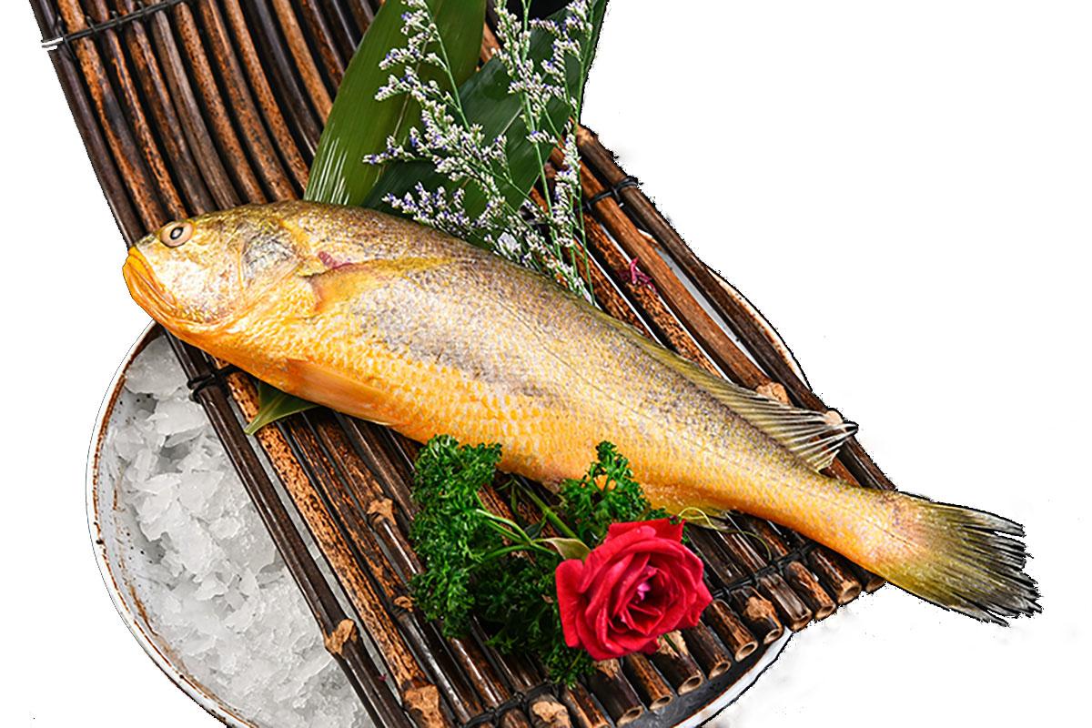 海上通超低温大黄鱼.jpg